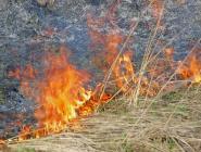 Сухая трава в Архангельской области в этом году горит чаще