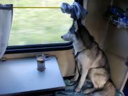 Домашним животным разрешили ездить в поездах без хозяев