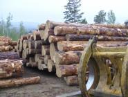 В России выявят регионы, в которых торгуют незаконно заготовленной древесиной