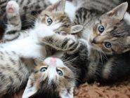 Депутат предложил ограничить количество животных в квартирах