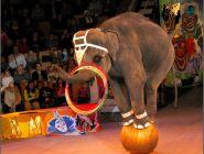 Детям могут запретить посещение цирков?