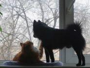 В Поморье началась реализация федерального закона об ответственном обращении с животными