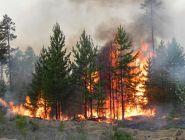 В Поморье – 5 лесных пожаров за праздники