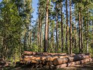 Индивидуальный предприниматель подозревается в нарушении требований охраны труда при лесозаготовках