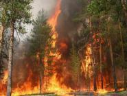 Число лесных пожаров в Поморье снизилось в три с половиной раза