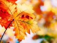 Сентябрь 2017 года – третий самый теплый на Северном полушарии Земли