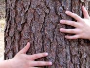 За сооруженный ребенком на дереве шалаш ответят родители