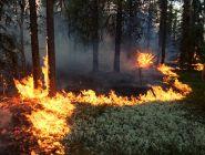 234 миллиона рублей областного бюджета – на борьбу с лесными пожарами в 2019 году