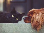 Количество кошек и собак в квартире могут ограничить