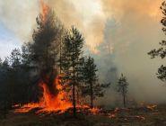 Лесной пожар пожар на окраине Сольвычегодска потушен