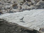 О предстоящем ледоходе и паводке в Архангельской области
