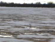 Пробито почти 500 метров льда