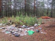 Три несанкционированные мусорные свалки ликвидируют в Котласском районе