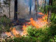 Подведены итоги лесопожарного сезона в Поморье