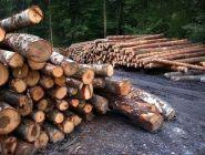 Счётная палата оценила ущерб от незаконной рубки лесов