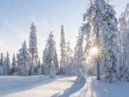 Россиянам предрекли морозную зиму