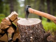 Минприроды РФ: ограничения по заготовке лесных даров касаются только предпринимательской деятельности