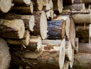 Вступил в законную силу приговор по уголовному делу о контрабанде лесоматериалов в крупном размере