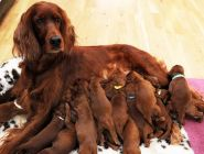 Российские зоозащитники предлагают ввести квоты на разведение кошек и собак