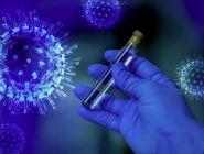 За последние сутки в Поморье выявлено 255 новых случаев заболевания COVID-19
