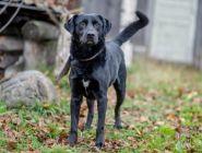«Собачий патруль» создан в центре помощи бездомным животным в Котласе
