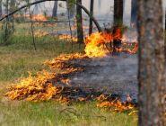 Пожароопасный сезон в Поморье завершен