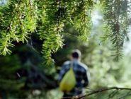 По телефону из лесов Архангельской области выводят до 80% «потеряшек»