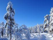 Росгидромет рассказал, какой будет предстоящая зима