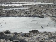 Обзор ледовой обстановки на реках на 13:00