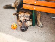 В правительство направят предложения по ужесточению наказания за издевательство над животными