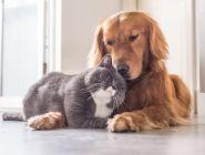 Правительство России поддержало законопроект о чипировании домашних животных