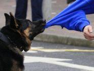 С владельцев собаки, укусившей ребёнка, взыскана компенсация морального вреда и расходы, связанные с повреждением здоровья